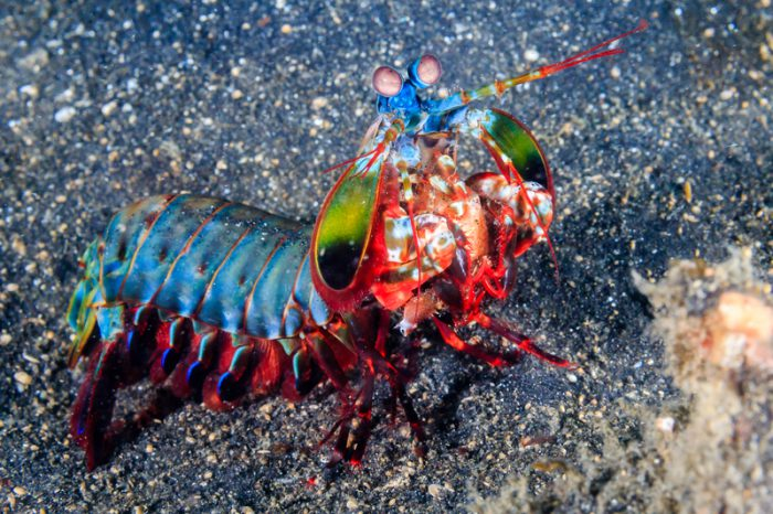 KA-POW! This bot mimics the punch of the mantis shrimp