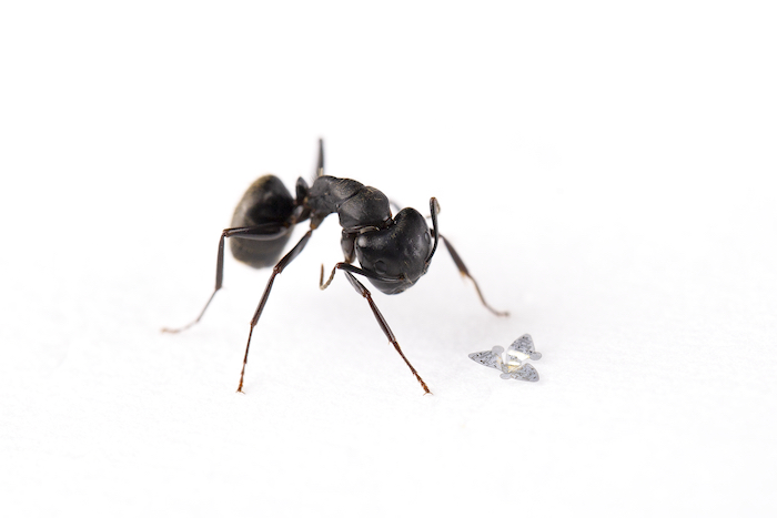 Flying microchip is world's smallest flying structure